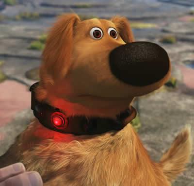 squirrel-dog